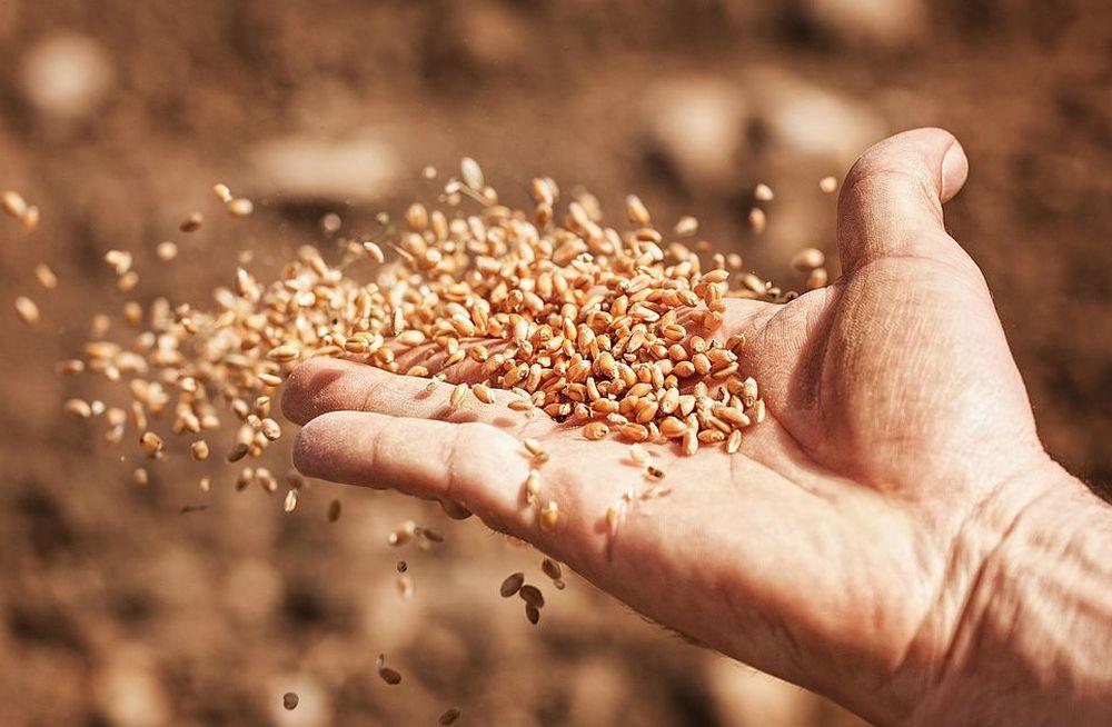 Россельхознрадзор информирует о правилах ввоза семенного и посадочного материала - новости Афанасий