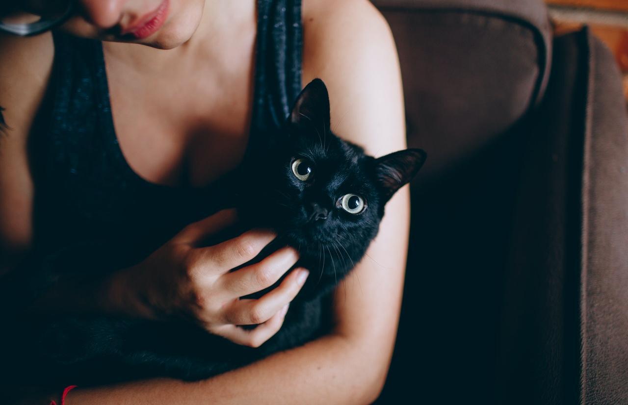 В Твери разбирают черных животных накануне Хэллоуина, зоозащитники встревожены - новости Афанасий