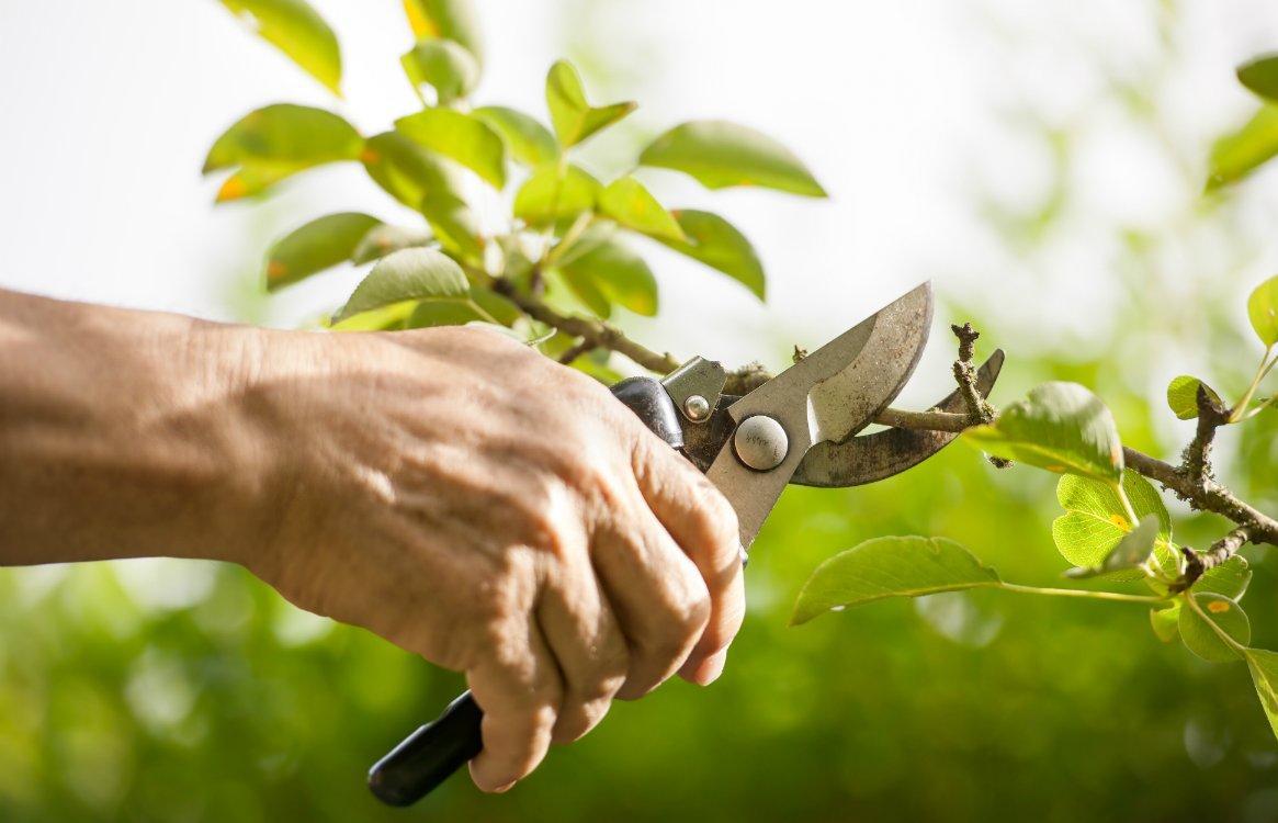 Дачникам рассказали, как подготовить сад к зиме - новости Афанасий