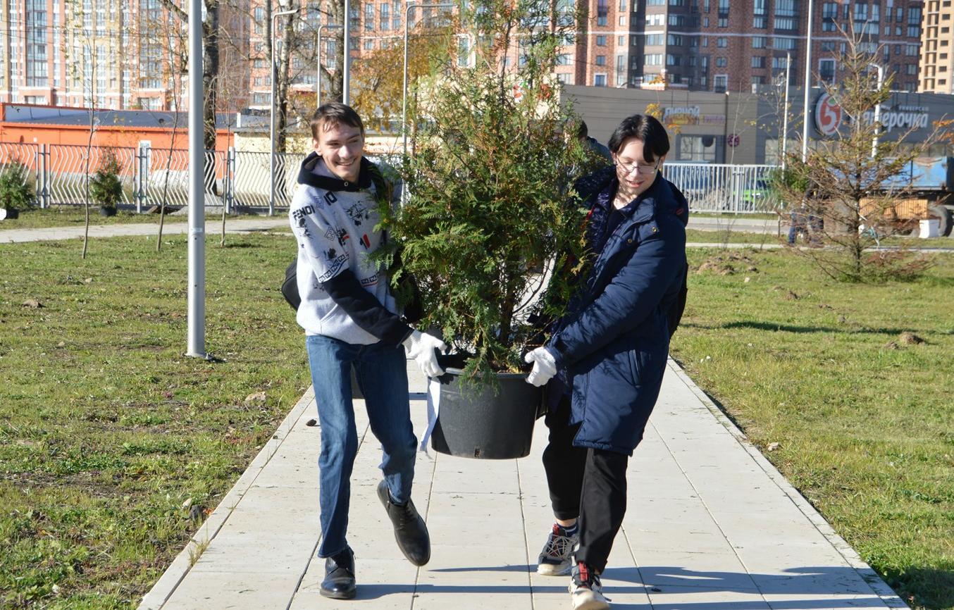 В «Южном» микрорайоне Твери в новом сквере высаживают деревья и кустарники - новости Афанасий