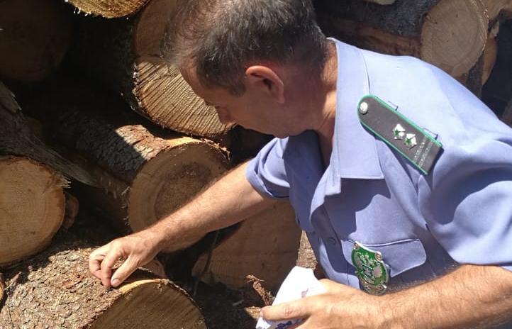 Специалисты Россельхознадзора проверили экспортную древесину - новости Афанасий