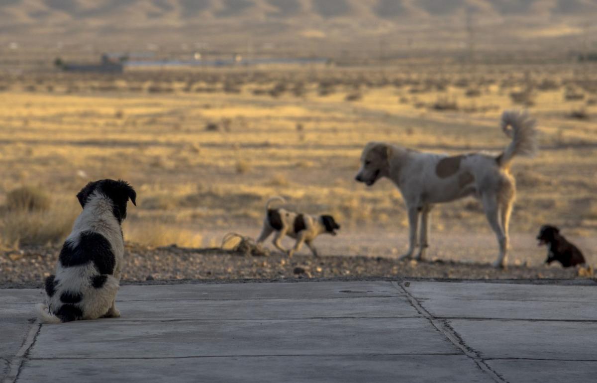 Собак, гонявшихся за ребенком в Твери, пытаются отловить - новости Афанасий