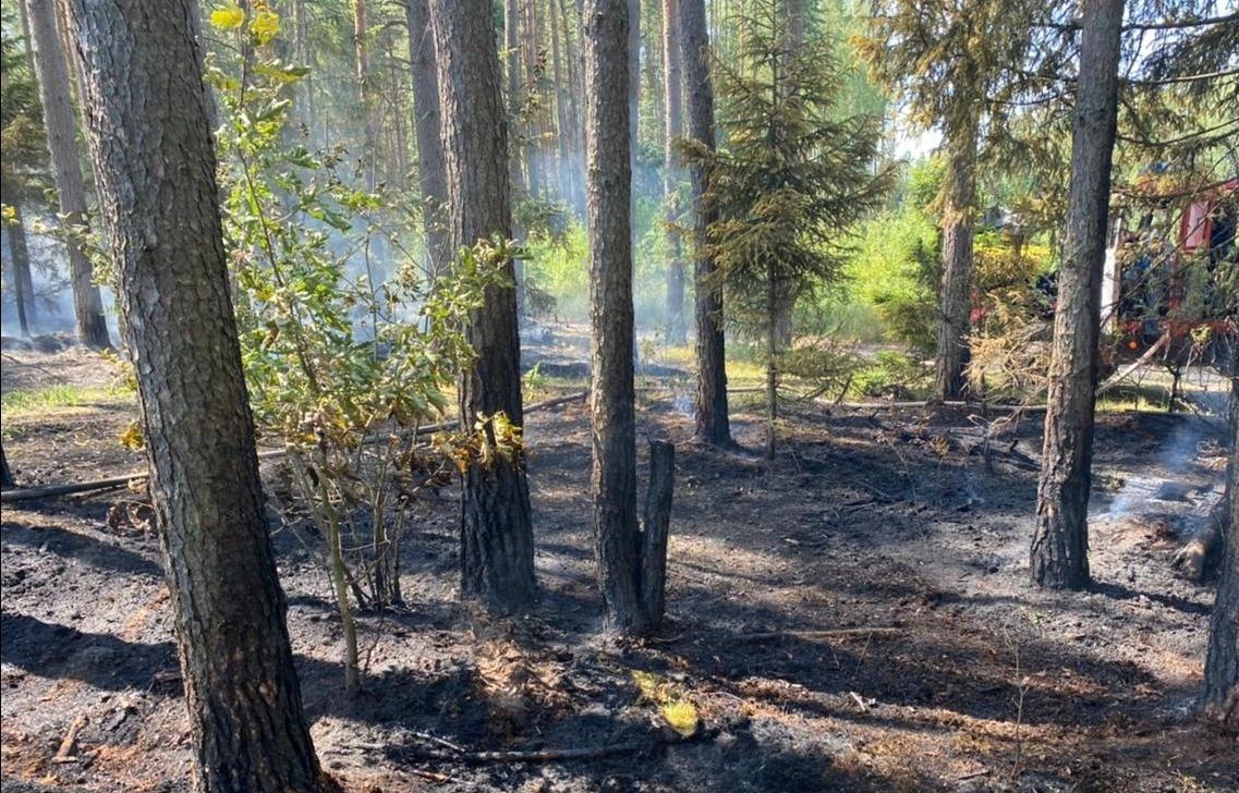 Лесной пожар тушат под Тверью - новости Афанасий
