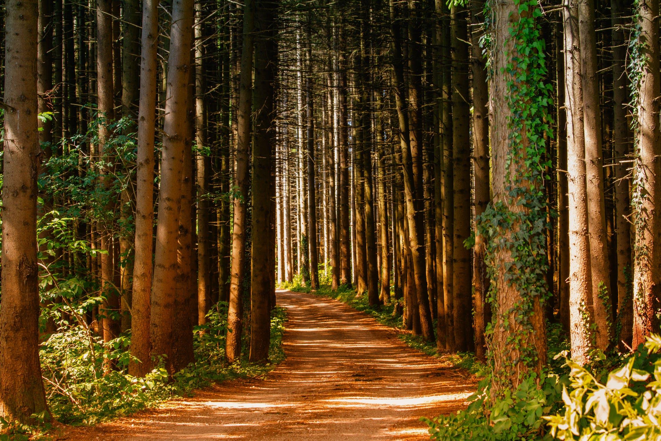 Еще в двух районах Тверской области ограничили посещение лесов