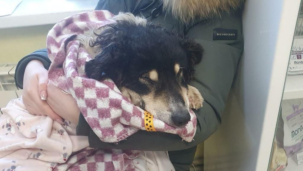 В Тверской области спасли вмерзшего в лед пса, от которого отказалась хозяйка - новости Афанасий