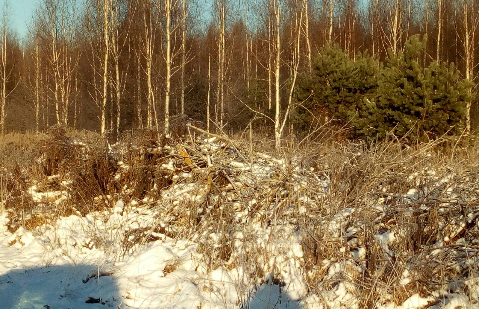 В Кимрском районе выявлено загрязнение земель сельскохозяйственного назначения порубочными остатками - новости Афанасий
