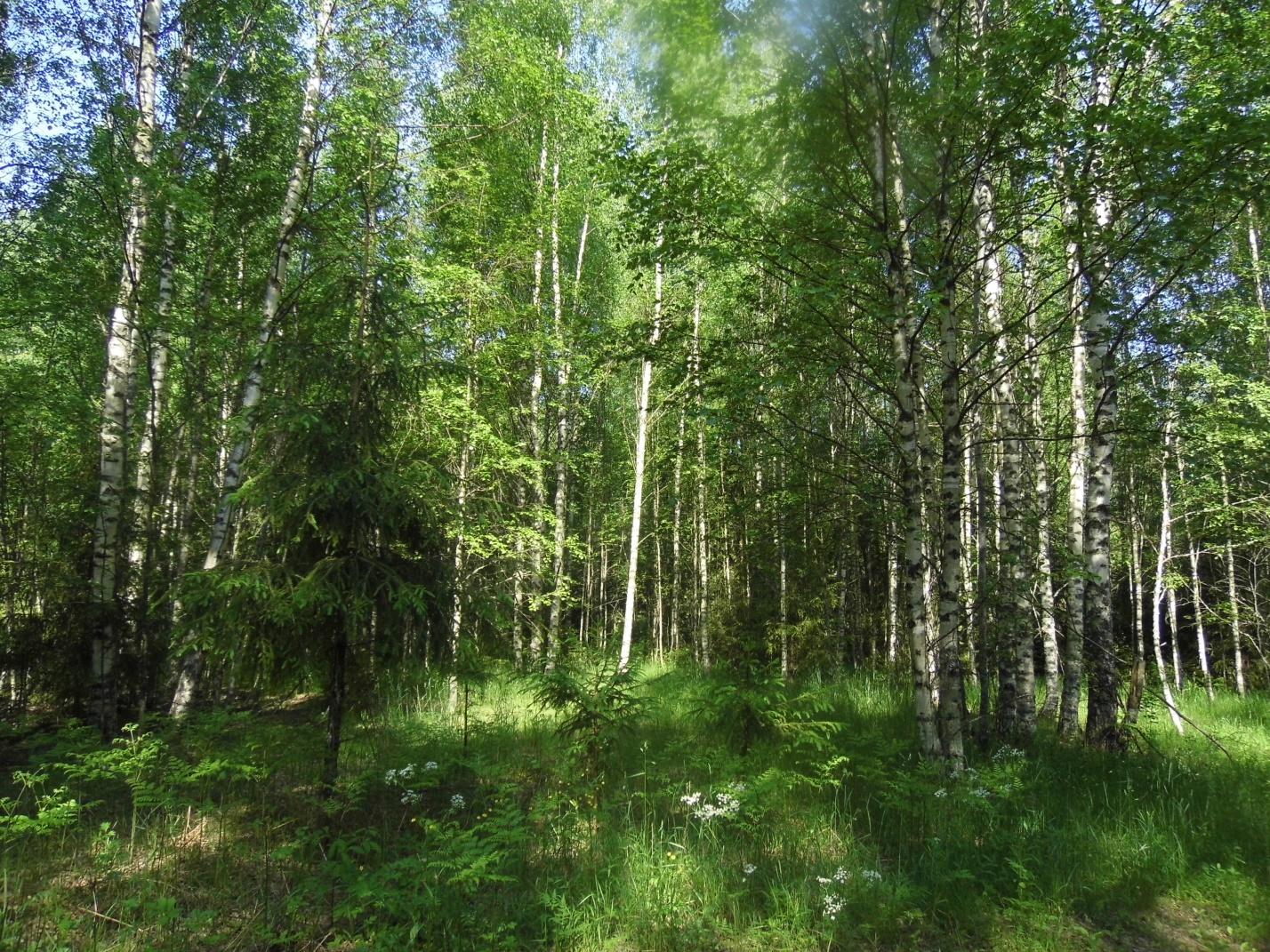 200 га поля в Тверской области заросли кустами и деревьями - новости Афанасий