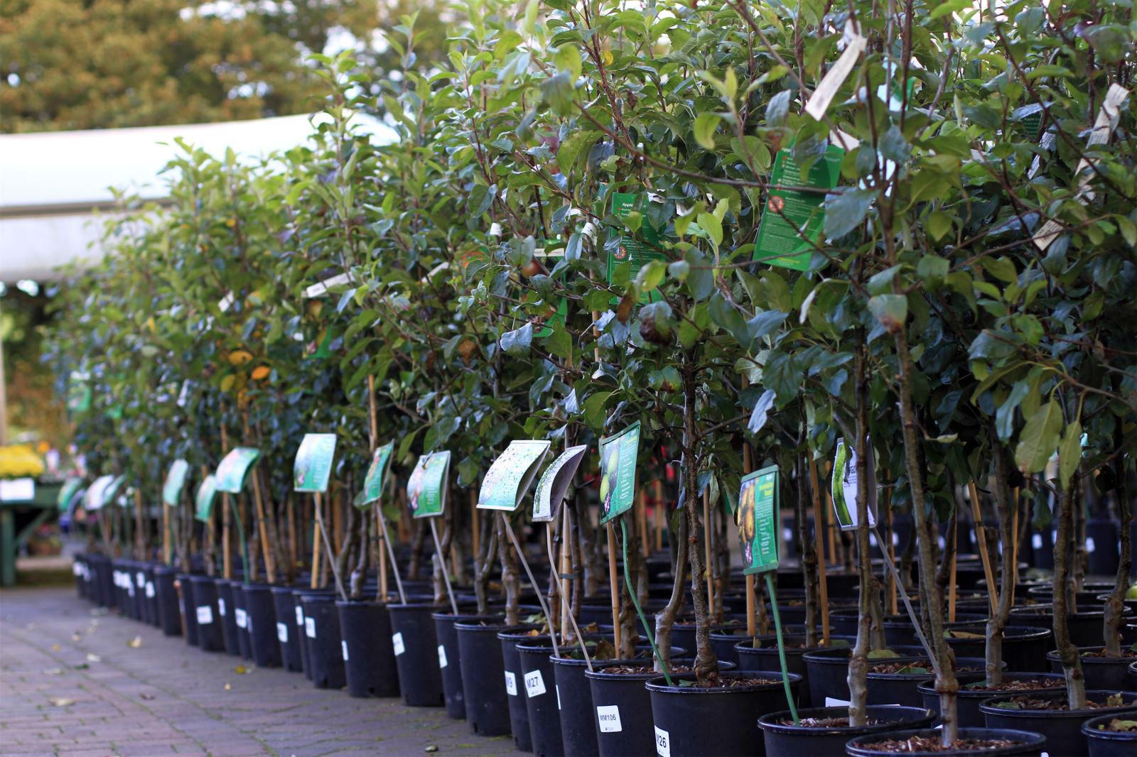 Информация для огородников: риски при приобретении саженцев в осенний период