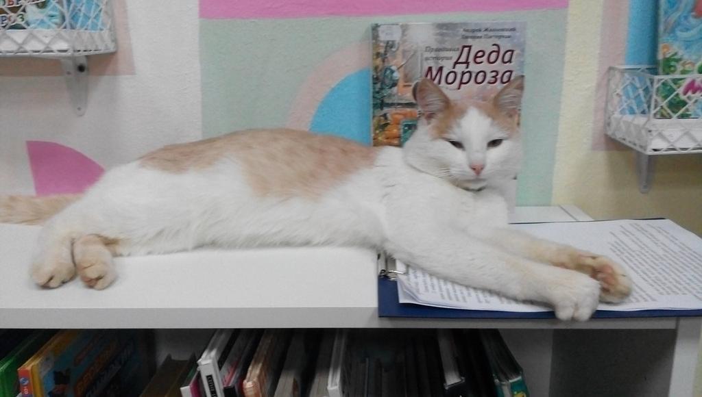 Знаменитого на всю Россию SMM-мяунджера кота Степана заменит на посту хвостатый сотрудник-стажер - новости Афанасий