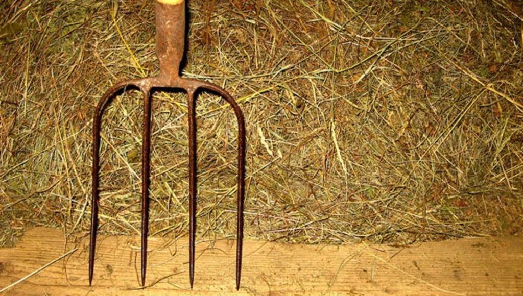 В Тверской области алиментщица прогуливала тяжелые исправительные работы и получила срок - новости Афанасий