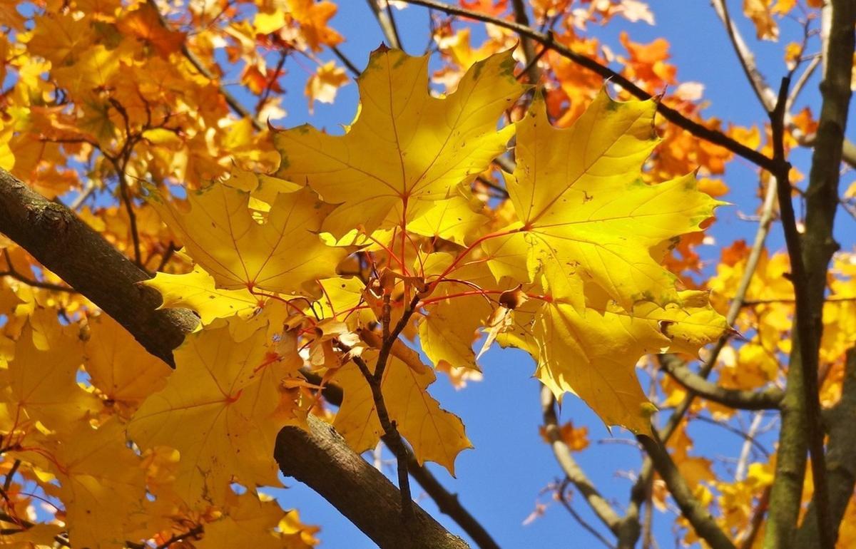 В Центральной России наступит «золотая осень»