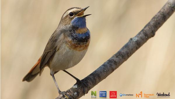 Фотовыставка «Природа смотрит на тебя» откроется в Твери