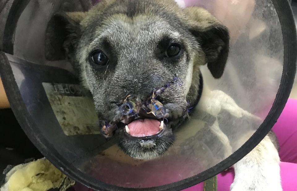 В Твери проходит акция помощи бездомным животным - новости Афанасий