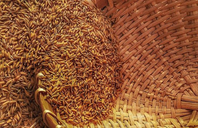 Россельхознадзор призвал производителей не забывать о качестве зерна - новости Афанасий