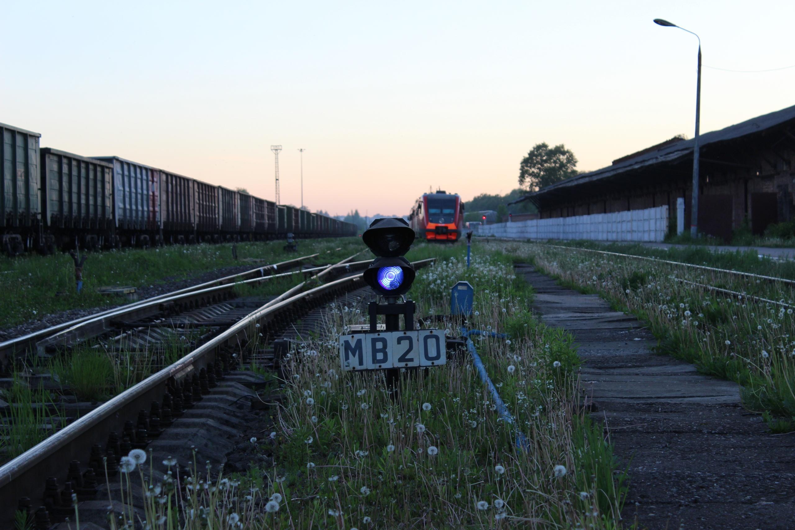 В Тверской области «Сапсан» сбил вышедшего на пути лося - новости Афанасий