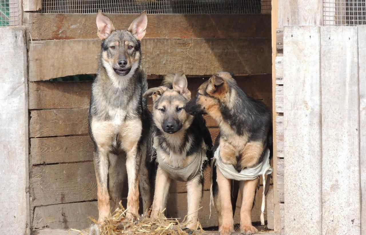Более 350 собак приюта «Новая жизнь» в Бежецке остались без опеки — хозяйка попала в больницу