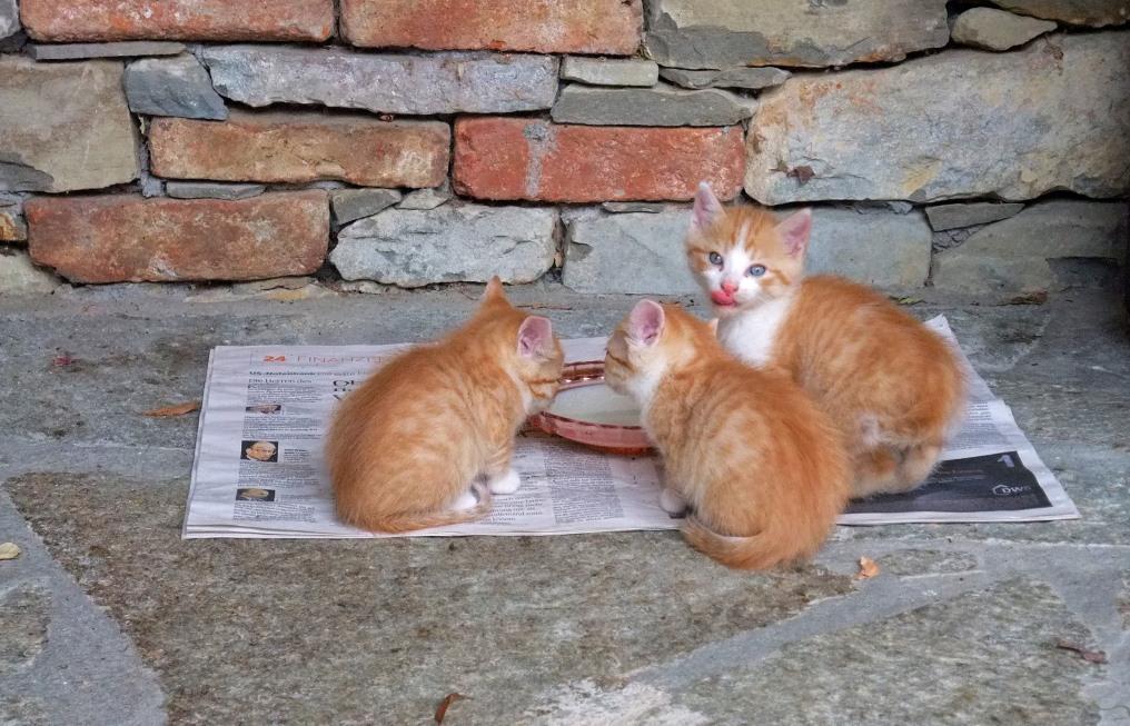 В Твери хотят запретить кормить бродячих животных на улицах - новости Афанасий