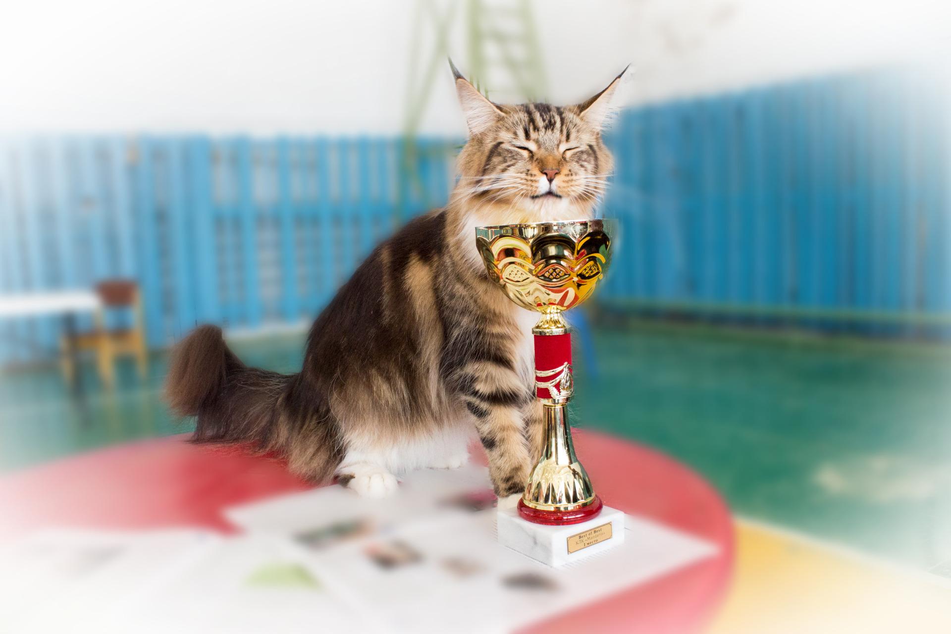 Жители Твери могут выбрать самую очаровательную кошку