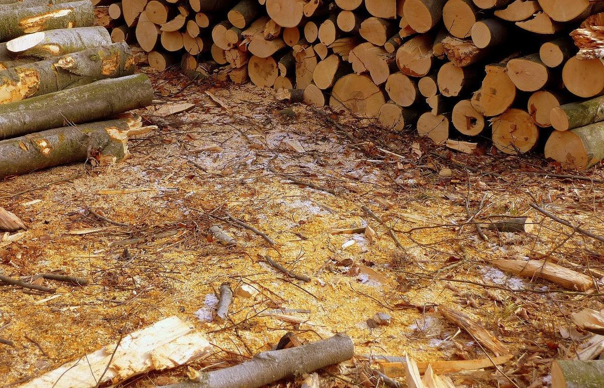 Организацию оштрафовали за неубранные отходы лесопереработки под Тверью - новости Афанасий