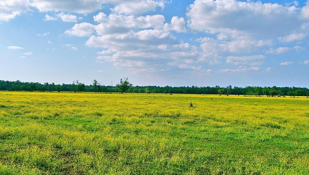 В Твери начнется суд над чиновниками, обвиняемыми в махинациях с землей в Эммаусском сельском поселении - новости Афанасий