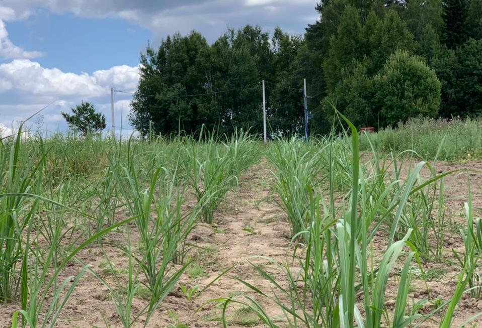 Для вовлечения земель в сельскохозоборот разработан проект создания карбоновой фермы