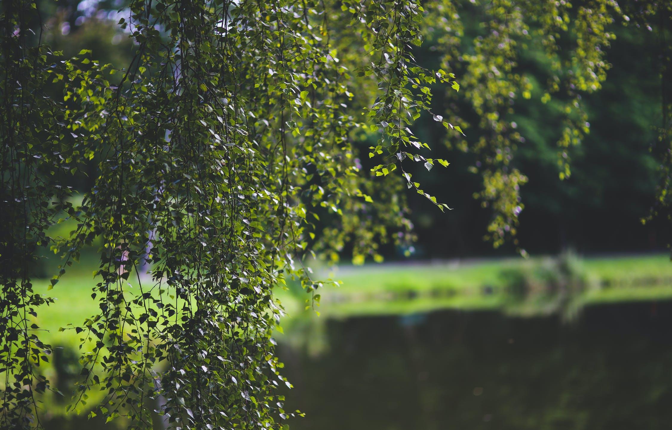 Дожди в Тверской области прекратятся к концу недели