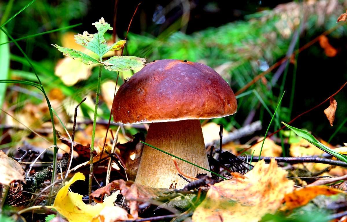 Впервые в Лесной кодекс России внесены понятия «лесоустройство», «лесной комплекс» и «древесина»