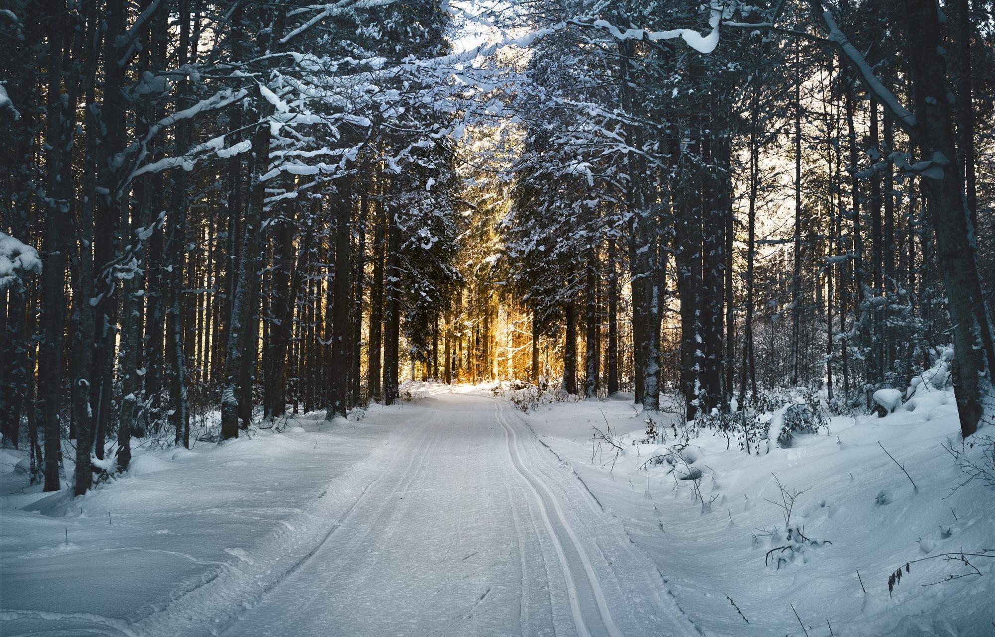 Синоптики прогнозируют холодное начало зимы в Тверской области