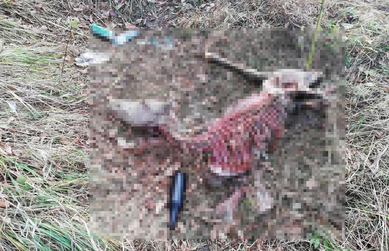 В Твери нашли обглоданный труп пони - новости Афанасий