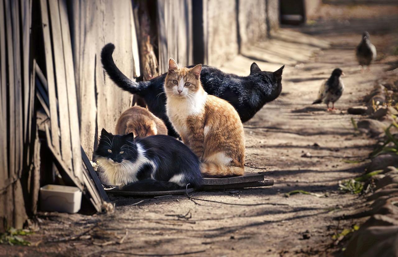 Власти Твери решили не запрещать кормить животных и птиц на улицах - новости Афанасий