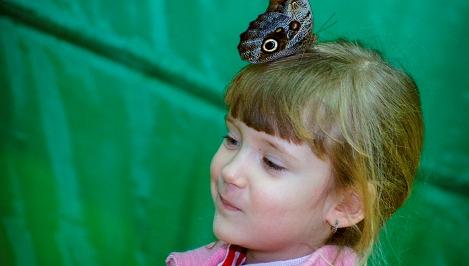 Яркой сказкой вечного лета стала для Твери в феврале выставка живых тропических бабочек / ФОТОрепортаж