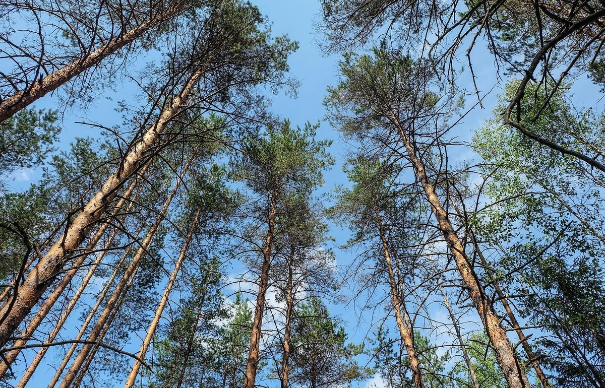 В лесничестве в Тверской области нарушали закон - новости Афанасий