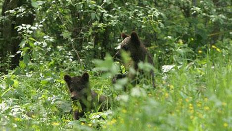 Юные экологи пройдут практику на Торопецкой биостанции «Чистый лес»