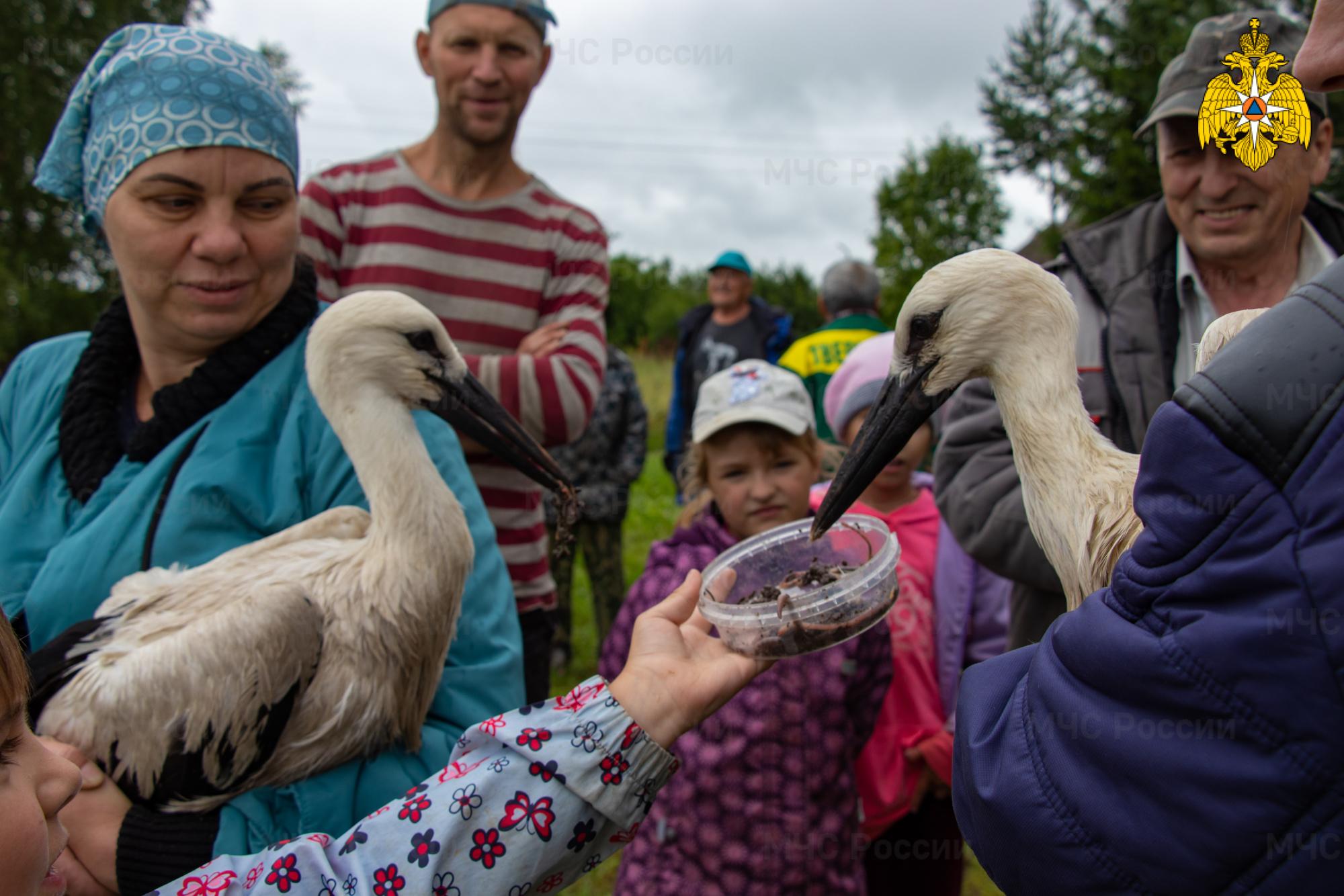 В Тверской области спасатели помогли семейству аистов вернуться в гнездо - новости Афанасий