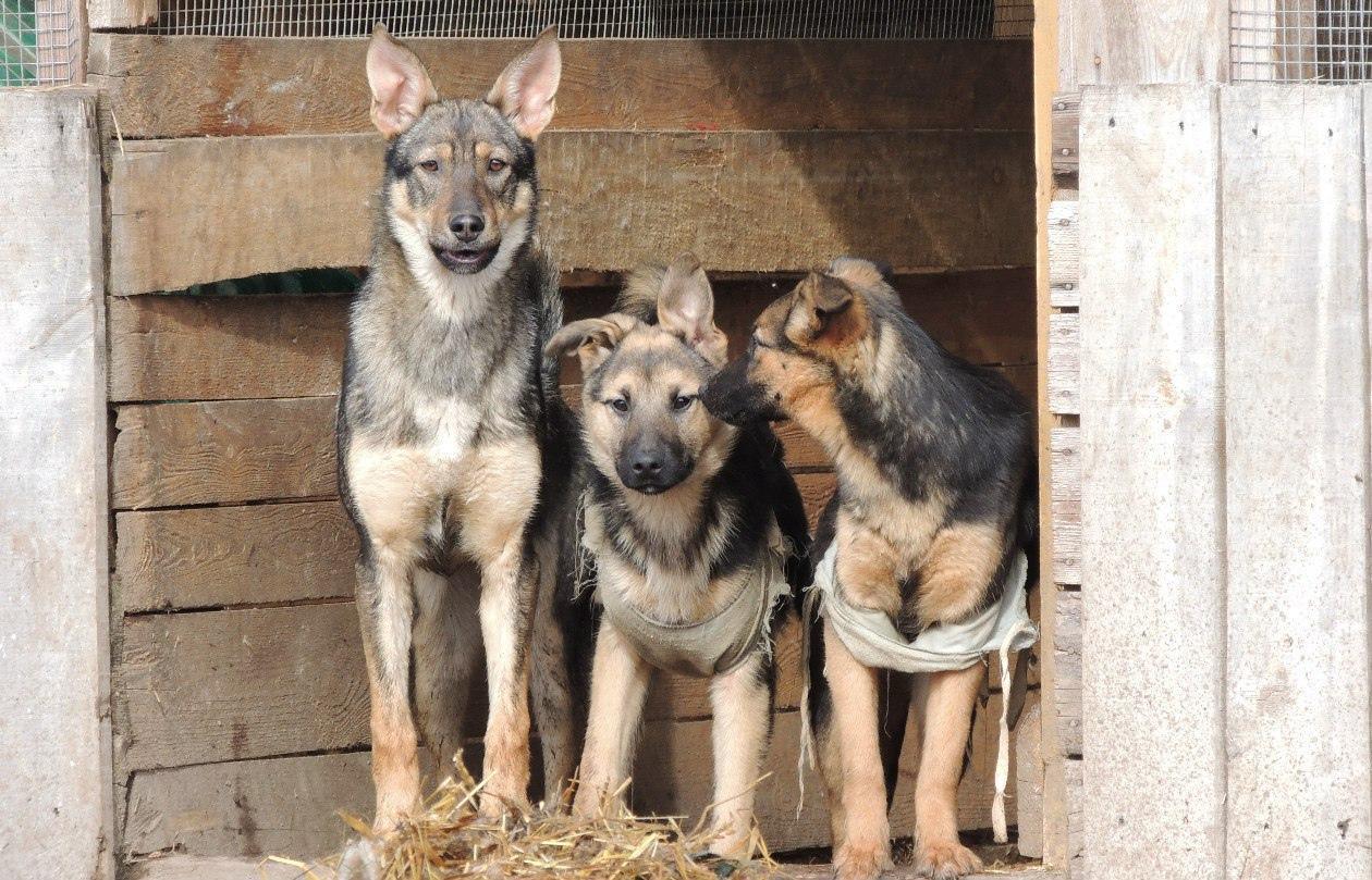 Более 350 собак приюта «Новая жизнь» в Бежецке остались без опеки — хозяйка попала в больницу - новости Афанасий