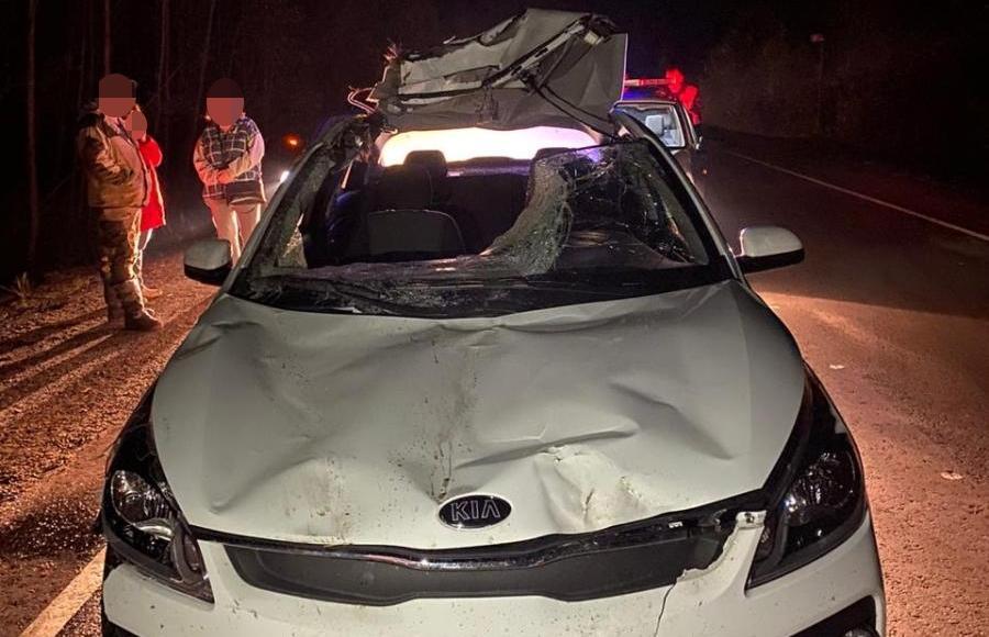 В Тверской области травмы получила пассажирка столкнувшейся с лосем иномарки - новости Афанасий