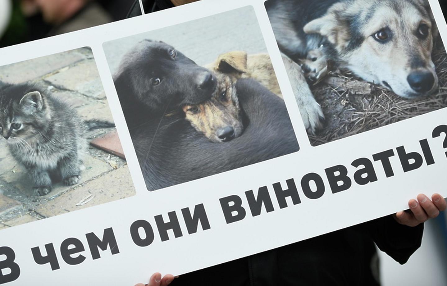 ВКонтакте против бездомных животных. В России массово блокируют сообщества зоозащитников - новости Афанасий