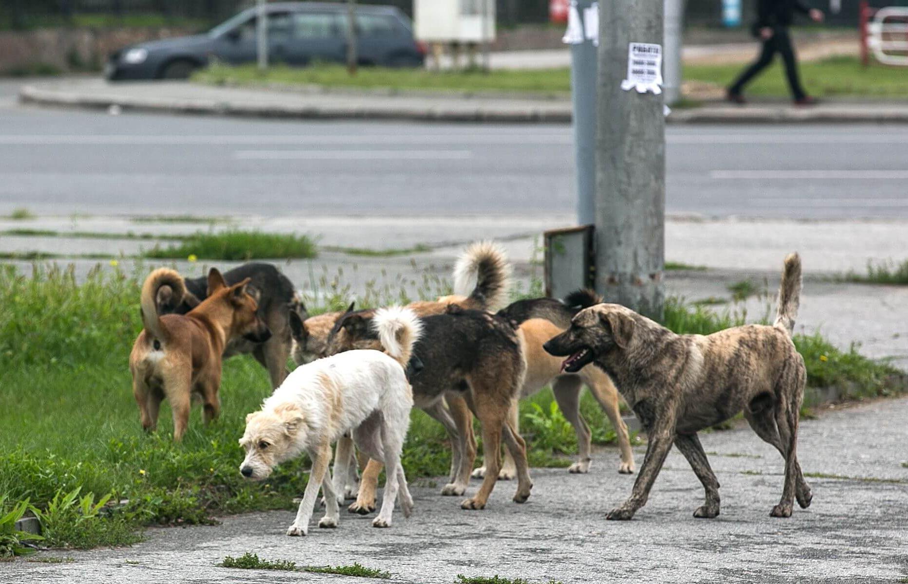 Собаки кидаются на детей в Твери - новости Афанасий