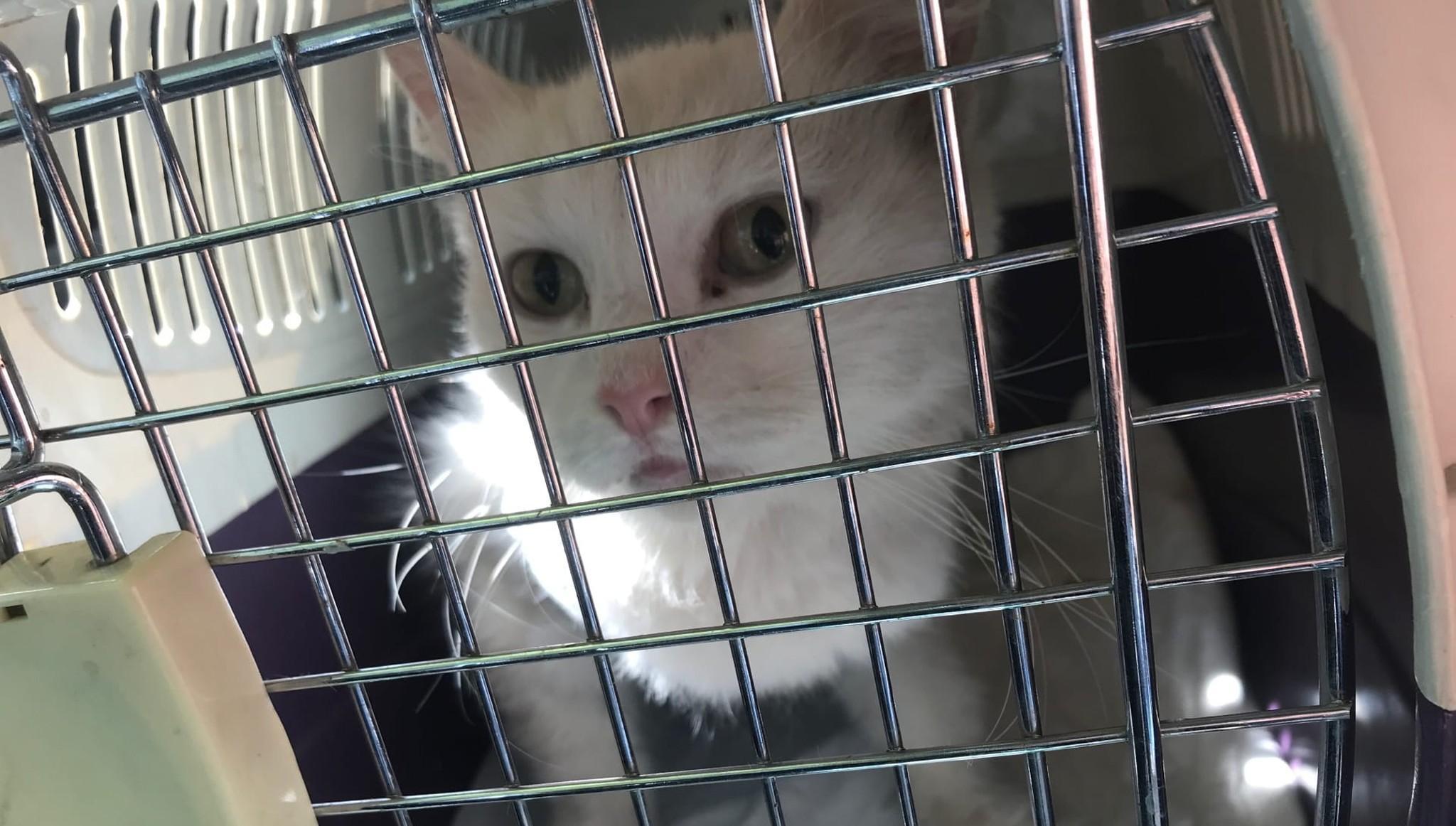 Волонтеры «Том Сойер Фест Кимры» спасли беременную кошку