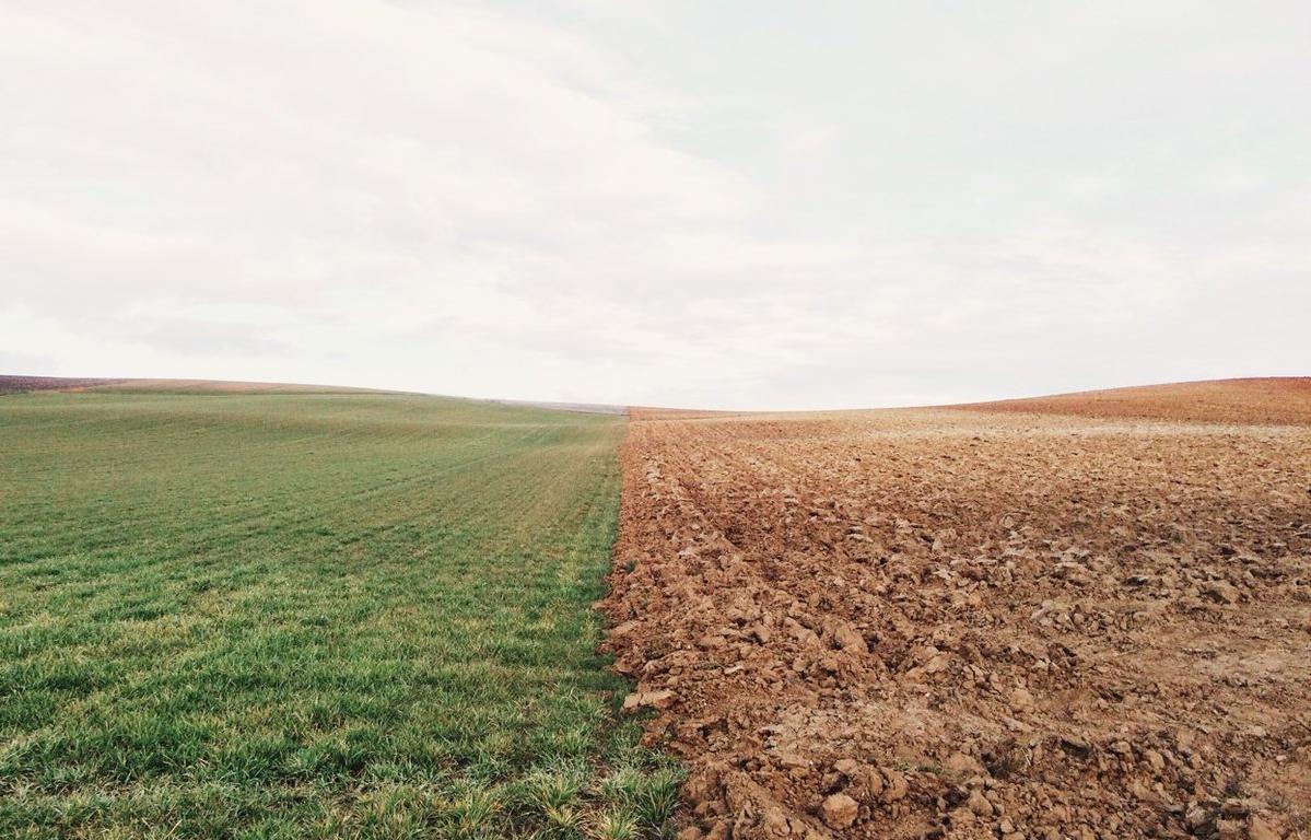 В Ярославской области в ходе рейдового осмотра обследовано порядка 10 гектаров земель сельскохозяйственного назначения - новости Афанасий