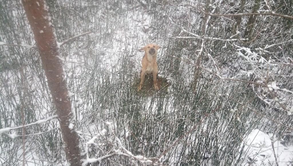 В Тверской области собаку выбросили в канаву со связанными лапами