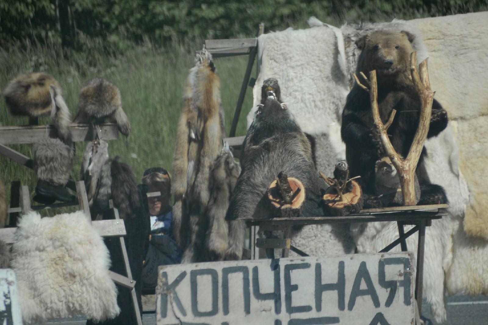 «Фактов не выявлено»: в Минприроды Тверской области ответили активисту, обвинившему регион в культе убийства диких животных - новости Афанасий