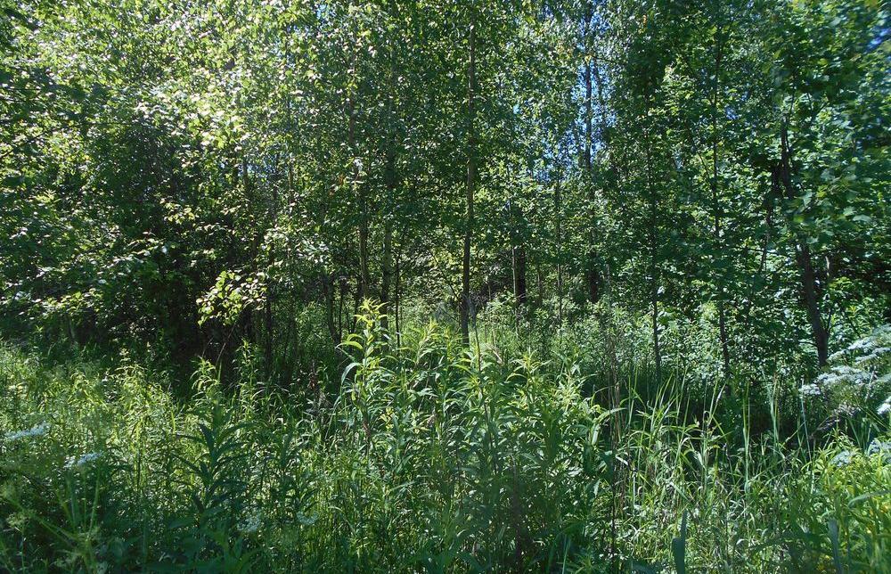 «Нестеровскому охотхозяйству» выдано предостережение о недопустимости нарушения земельного законодательства - новости Афанасий
