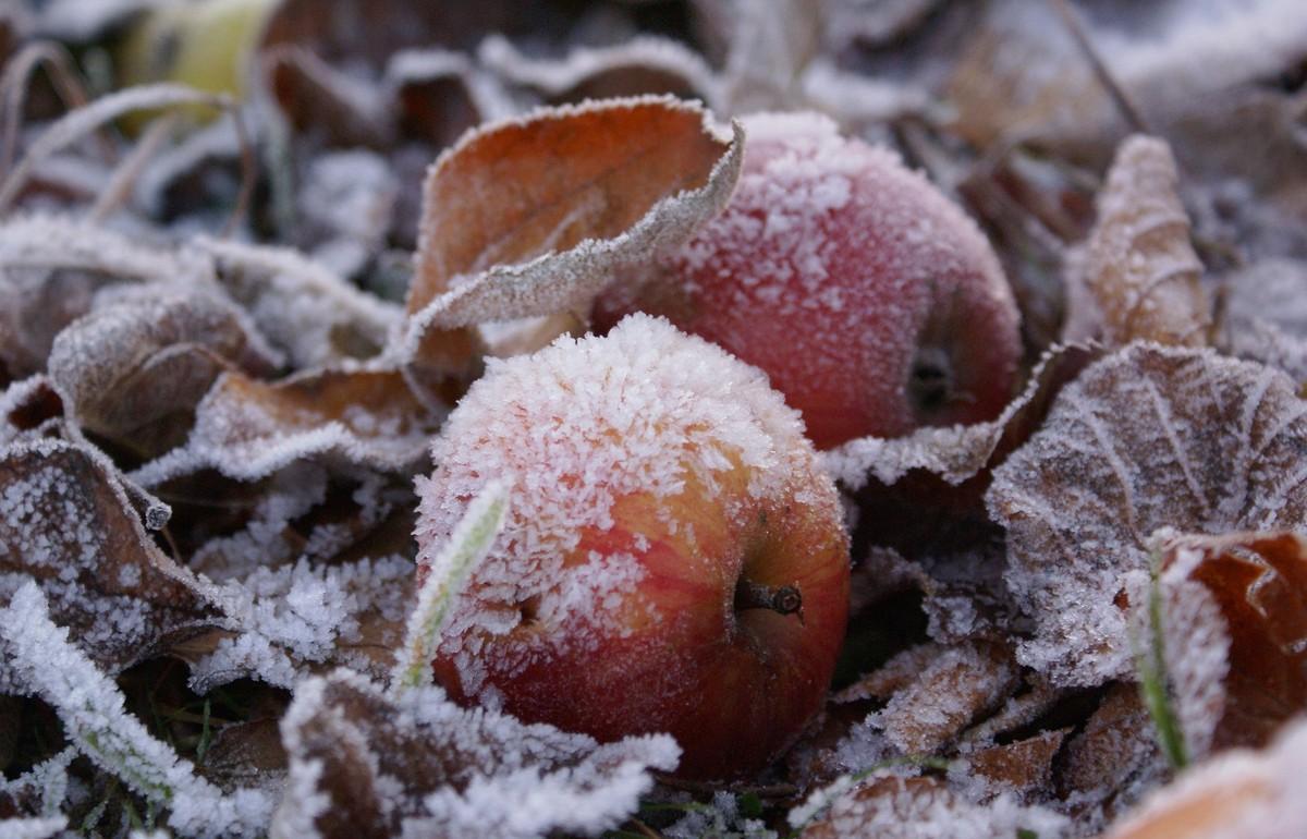 В Тверской области ожидаются заморозки до – 2 градусов