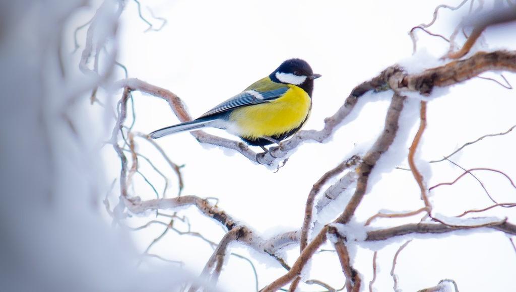 Тверской Ботанический сад приглашает на праздник «Птичья столовая» - новости Афанасий