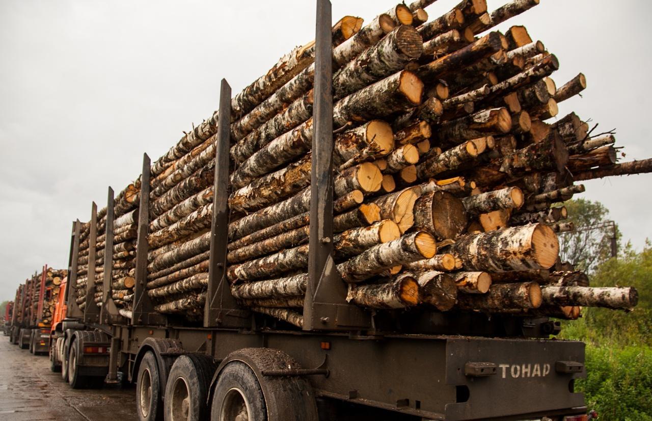 В Тверской области лесовоз загорелся во время движения - новости Афанасий