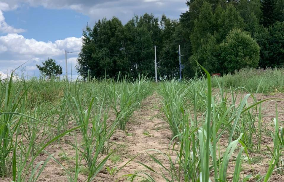 Для вовлечения земель в сельскохозоборот разработан проект создания карбоновой фермы - новости Афанасий