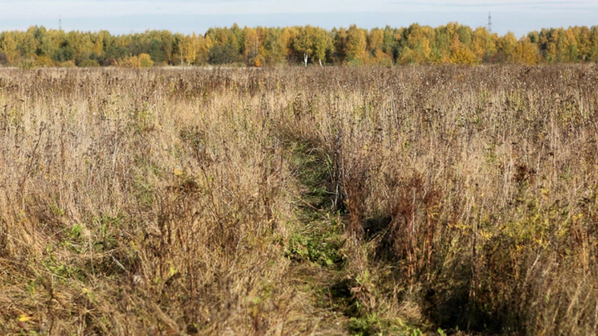 В Тверской области 5 гектаров пашни заросли ивой и ольхой - новости Афанасий