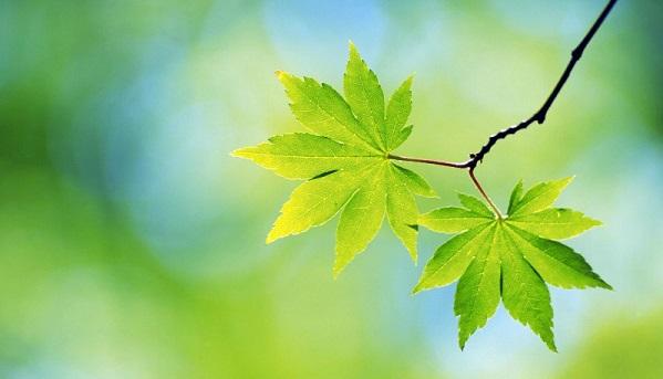 В Тверской области стартовал прием заявок на конкурс молодых поэтов «Зеленый листок»