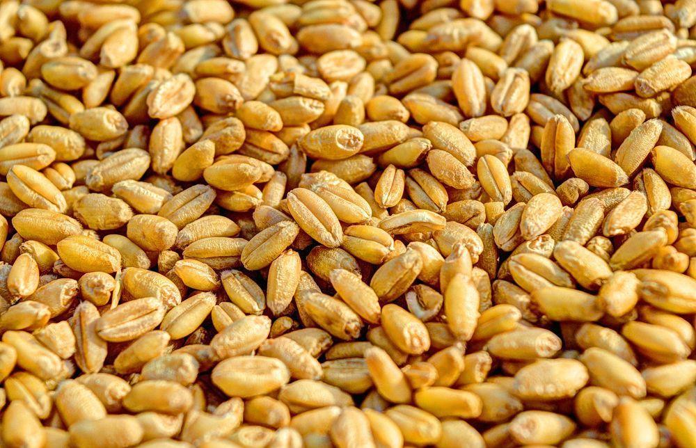Управление Россельхознадзора напоминает о правилах транспортировки зерна - новости Афанасий